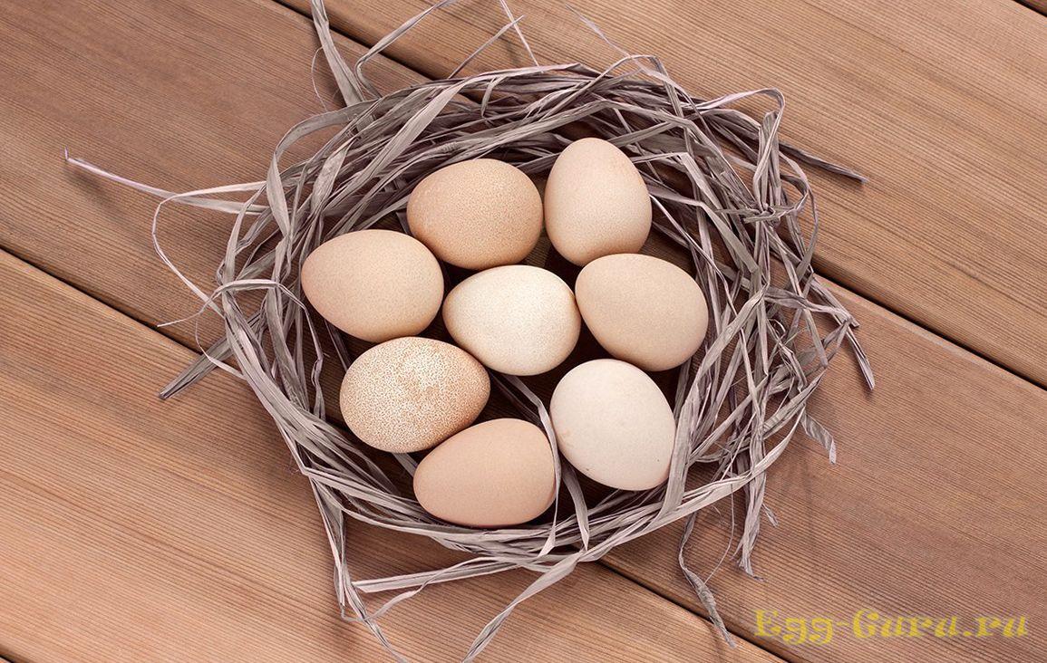 Фото яйца цесарки