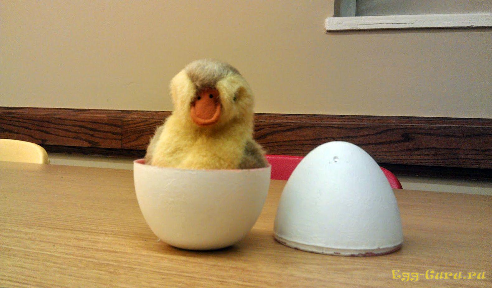 Что внутри утиного яйца?