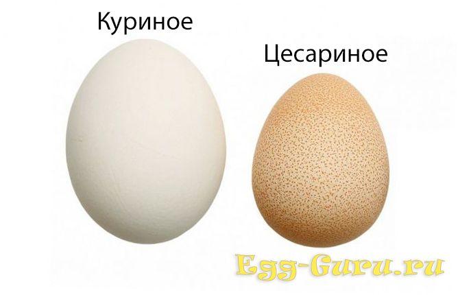 размер яйца цесарки в сравнении с куриным