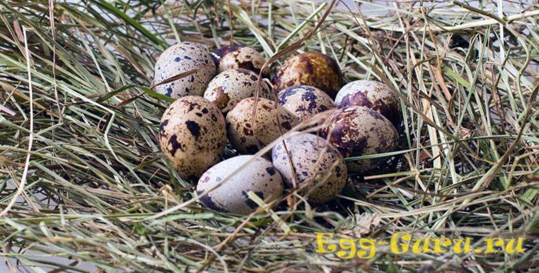 сожержание холестерина в перепелиных яйцах