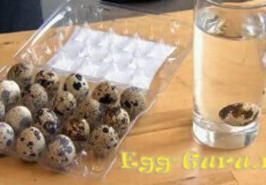 Как определить свежесть перепелиных яиц?