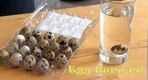 способ определения свежести перепелиного яйца в воде