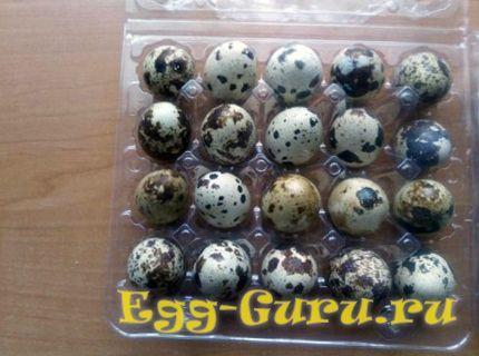 определение свежести перепелиных яиц в магазине