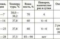 Температура инкубации утиных яиц