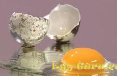Как определить свежесть перепелиных яиц