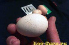Сколько варить яйцо цесарки вкрутую, всмятку?