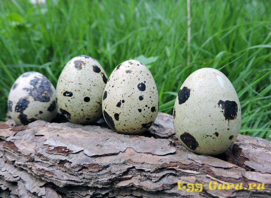 Перепелиные яйца при аллергии