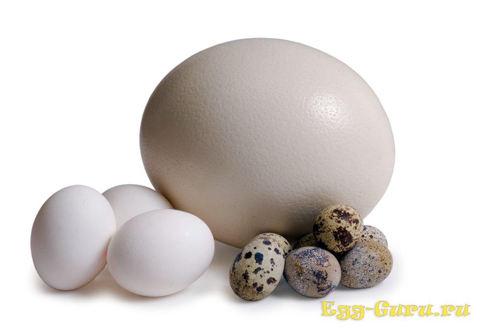Размер яйца страуса в сравнении с куриным и перепелиным