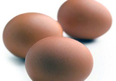 От чего зависит размер куриного яйца?
