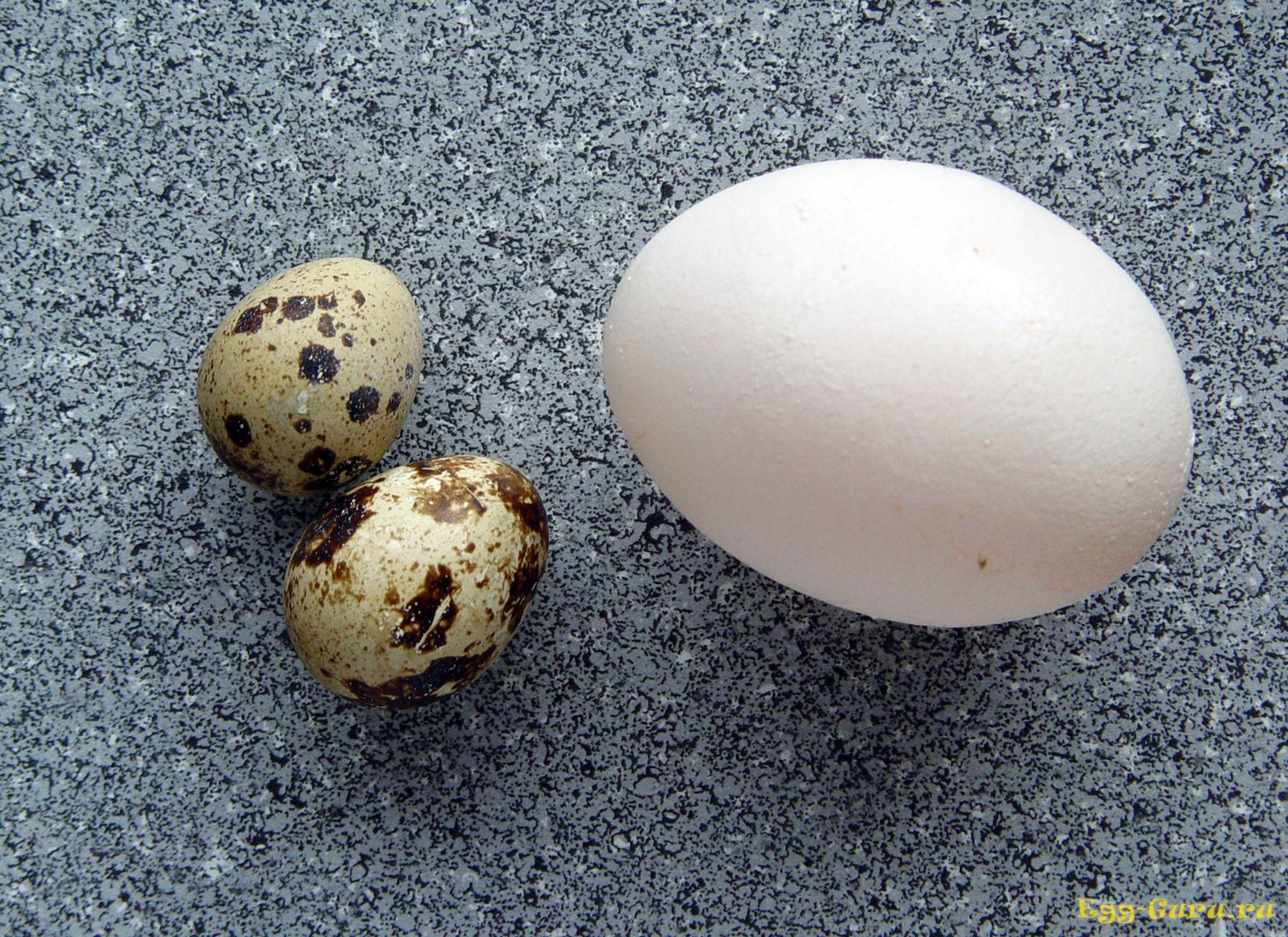 сравнение перепелиных яиц с куриными