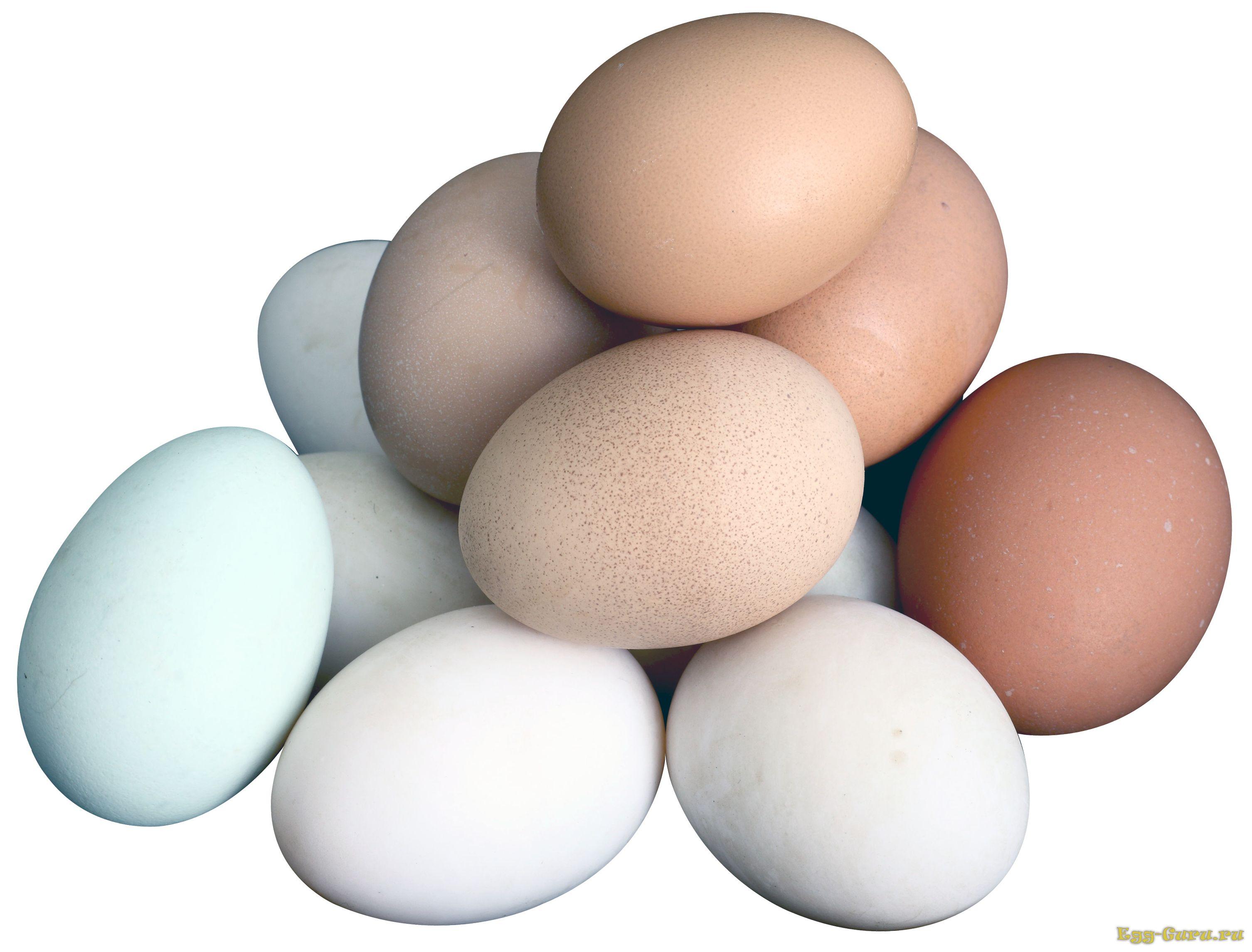 ГОСТ на яйца куриные 1 категории