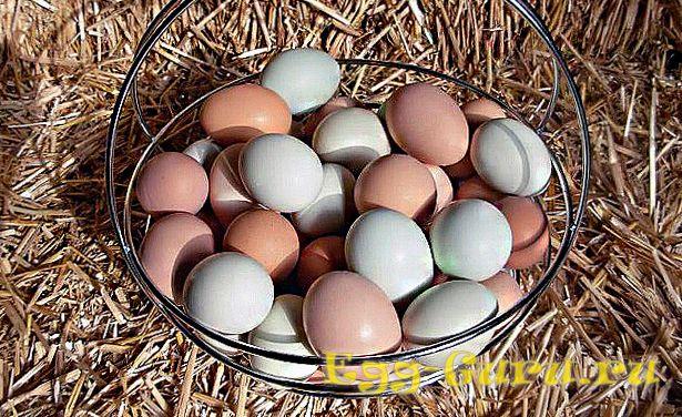 Фотография яиц цесарки