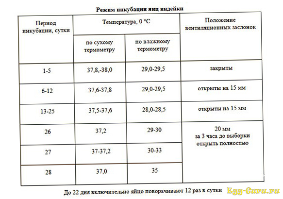 Таблица инкубации яиц индейки