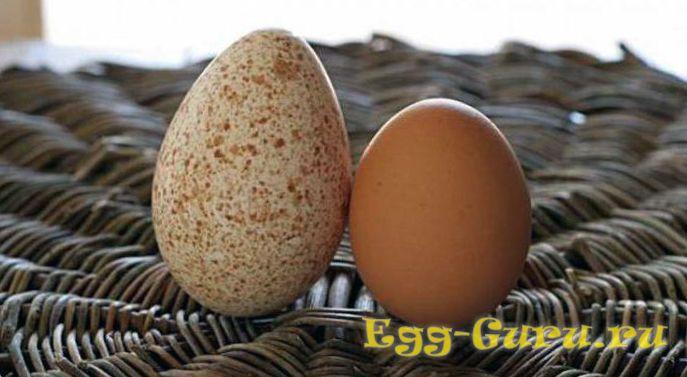 Яйца курицы и индейки